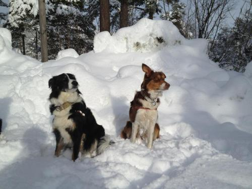 Karis hunde, Tessy og Dee Dee